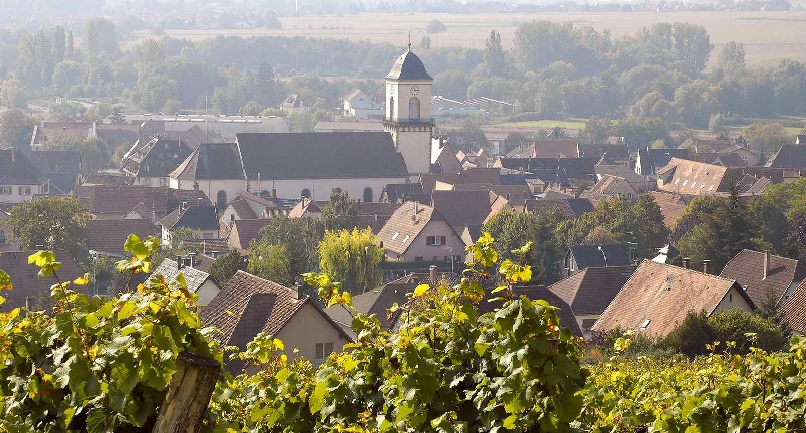 Vignoble de Marlenheim