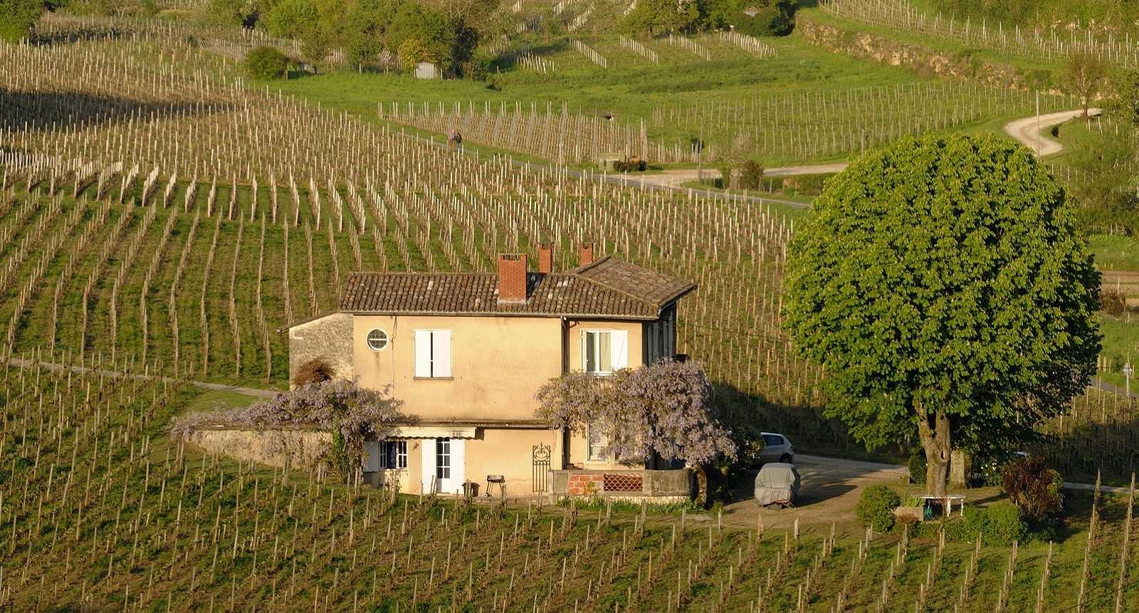 Vignes de Saint-Emilion