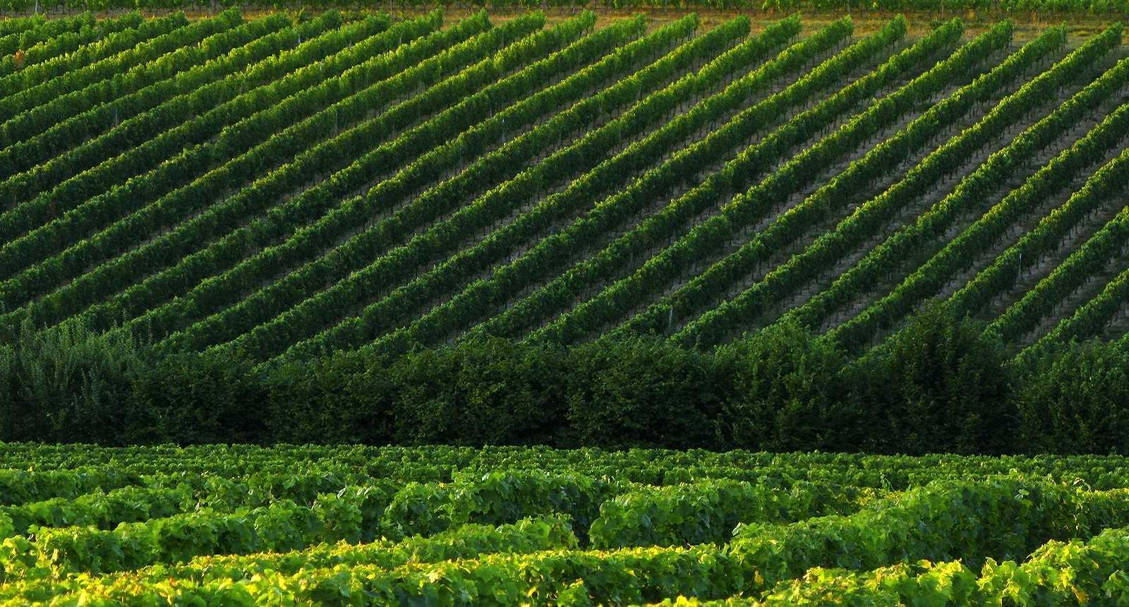 Vignoble des Grands Vins de Bordeaux