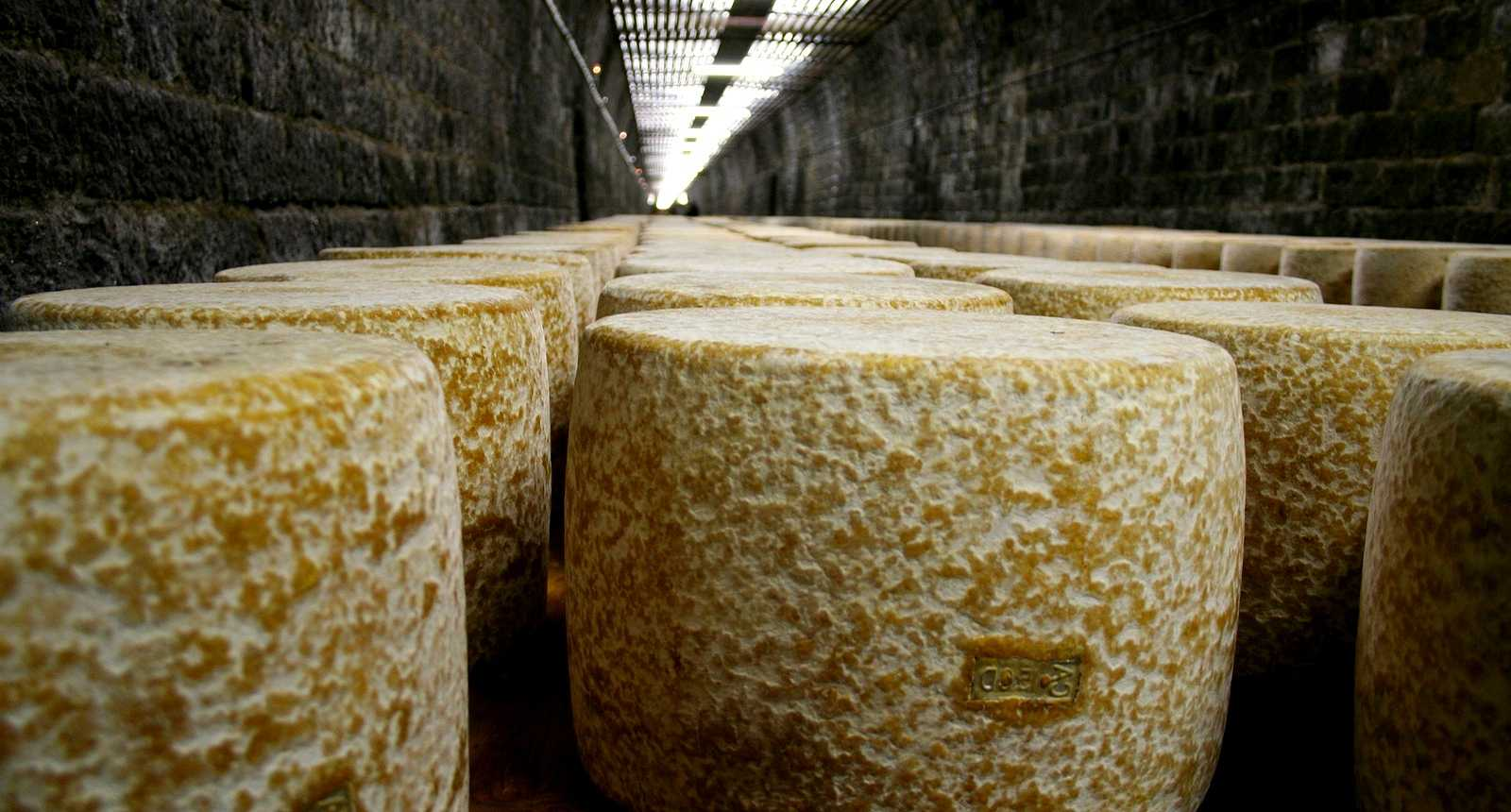 Photo affinage du fromage cantal en tunnel 326 for Affinage fromage maison