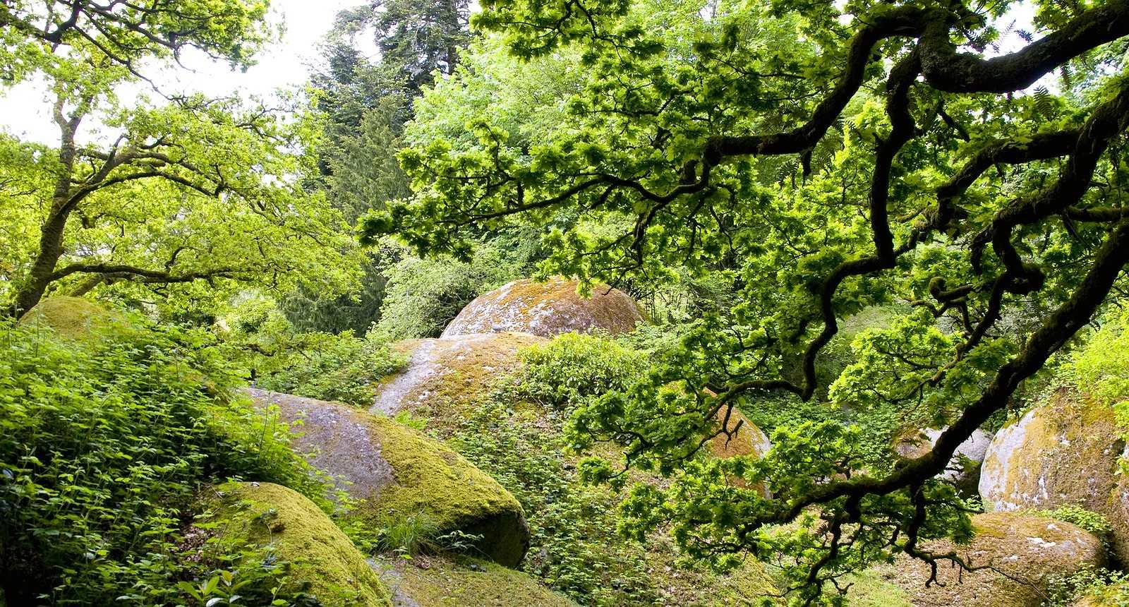 Image : Forêt de Huelgoat