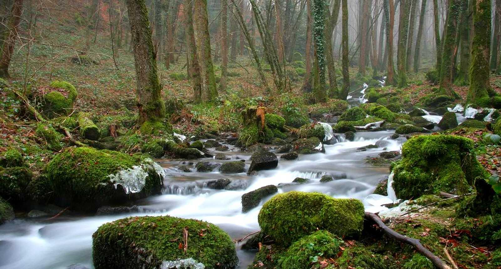 Le Ruisseau de Chêvrecul à Aillevillers-et-Lyaumont