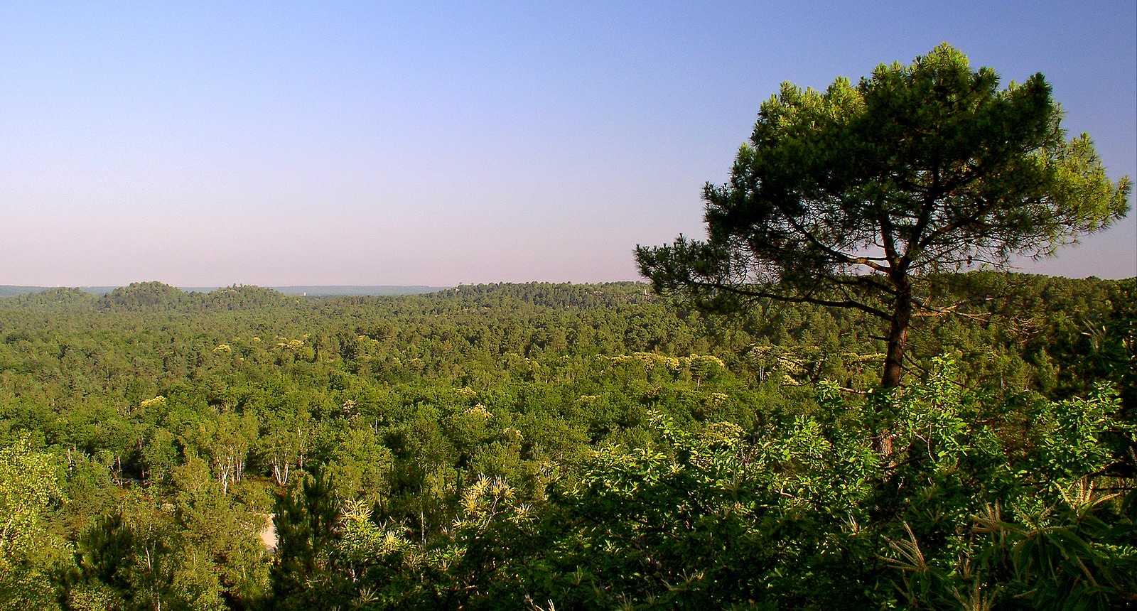 Le Massif des Trois Pignons dans la Forêt de Fontainebleau