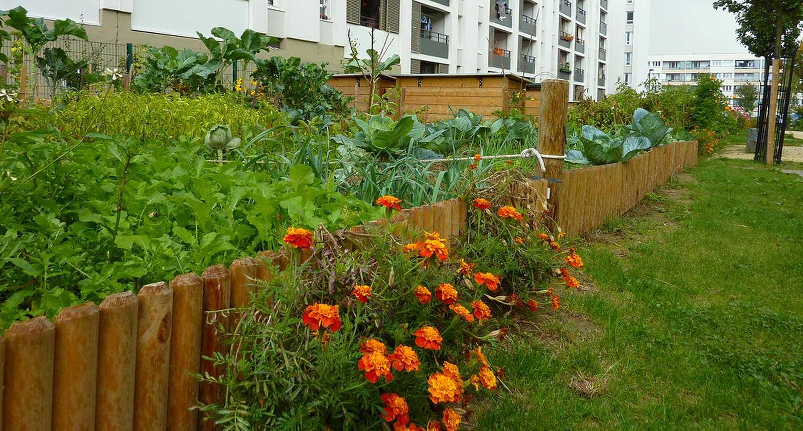 Photo les jardins ouvriers du z phyr aulnay sous bois - Petit jardin potager facile aulnay sous bois ...