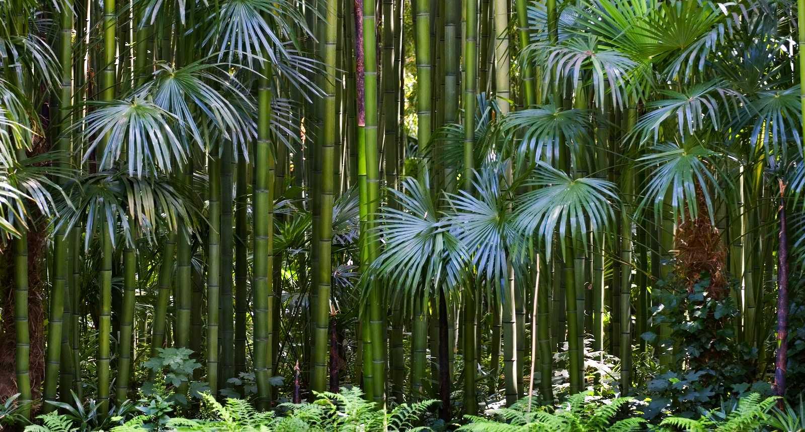 Image : Bambouseraie de Prafrance