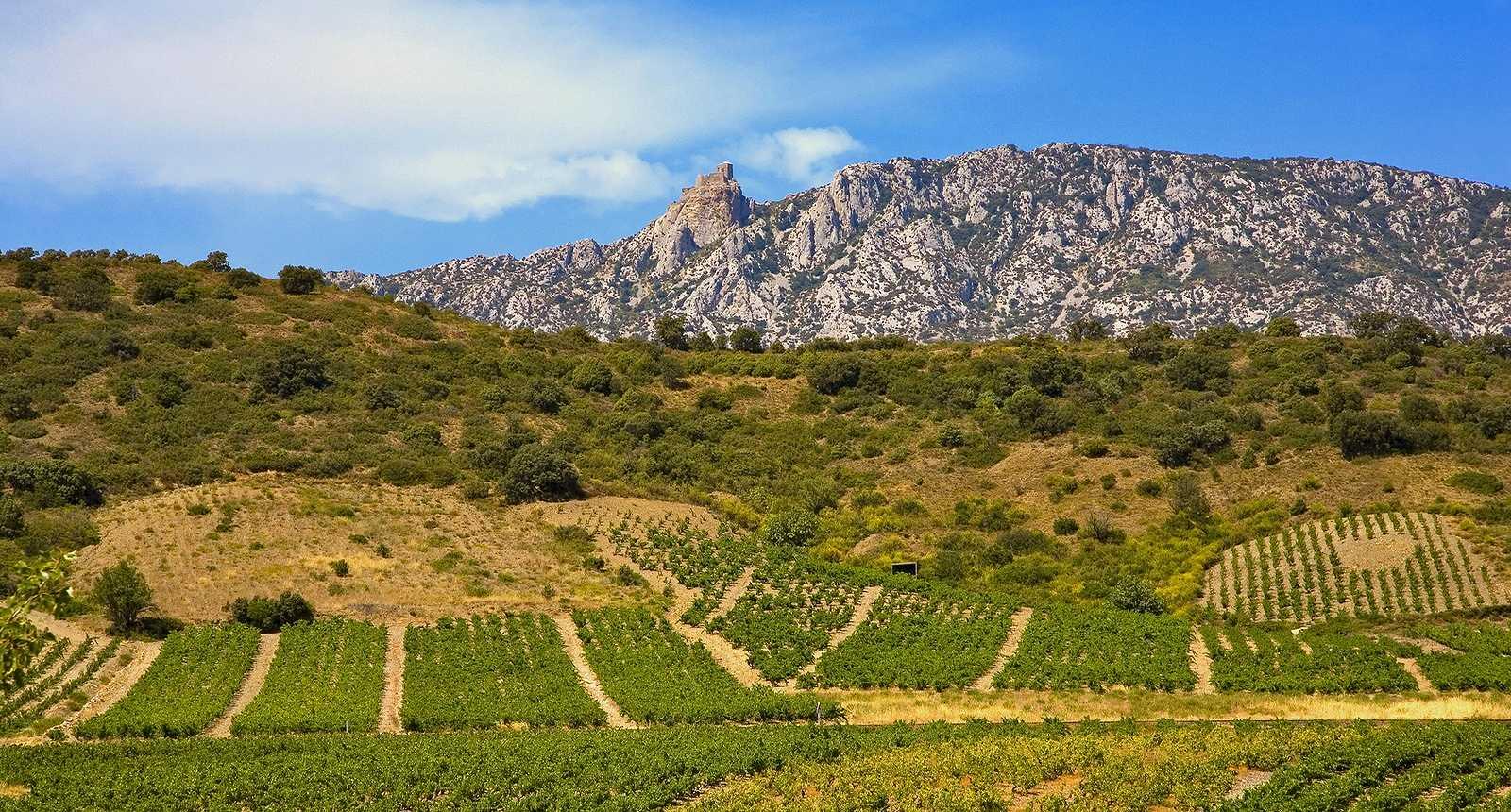 Le château cathare de Queribus, derrière les vignes...