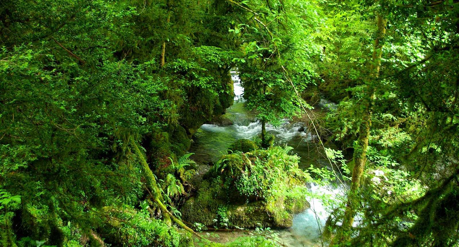 Le vert des Baronnies, près de Capvern-les-Bains