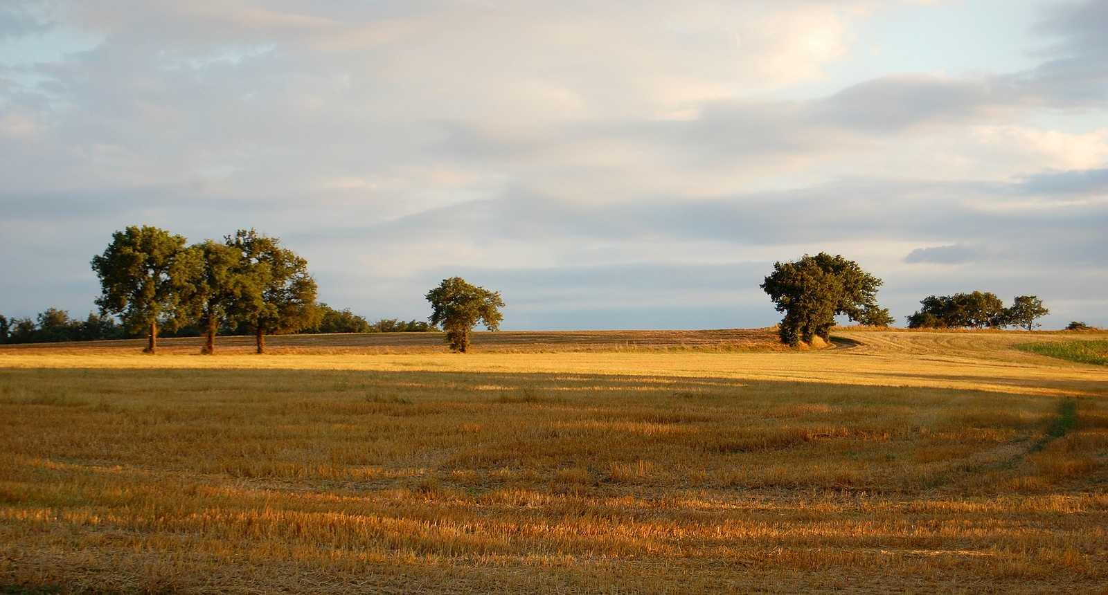 Les champs près de Mauvezin