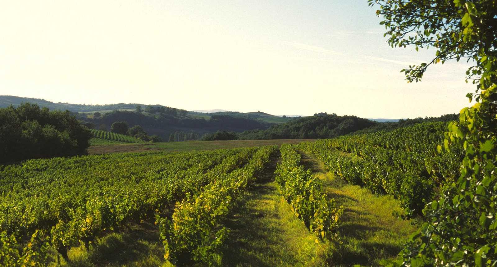 Le vignoble de Gaillac (2)
