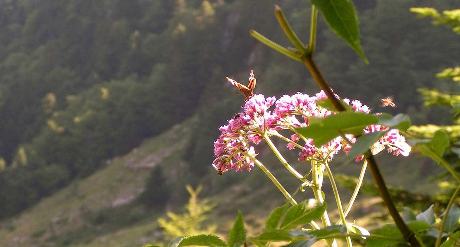 Vers le lac bleu, près de Bagnères-de-Bigorre