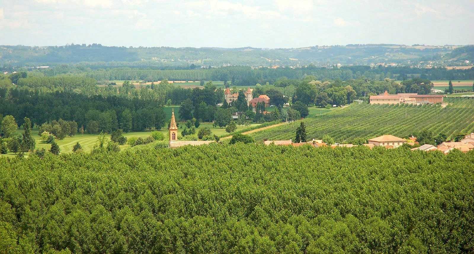 Vue sur Auvillar et le vignoble