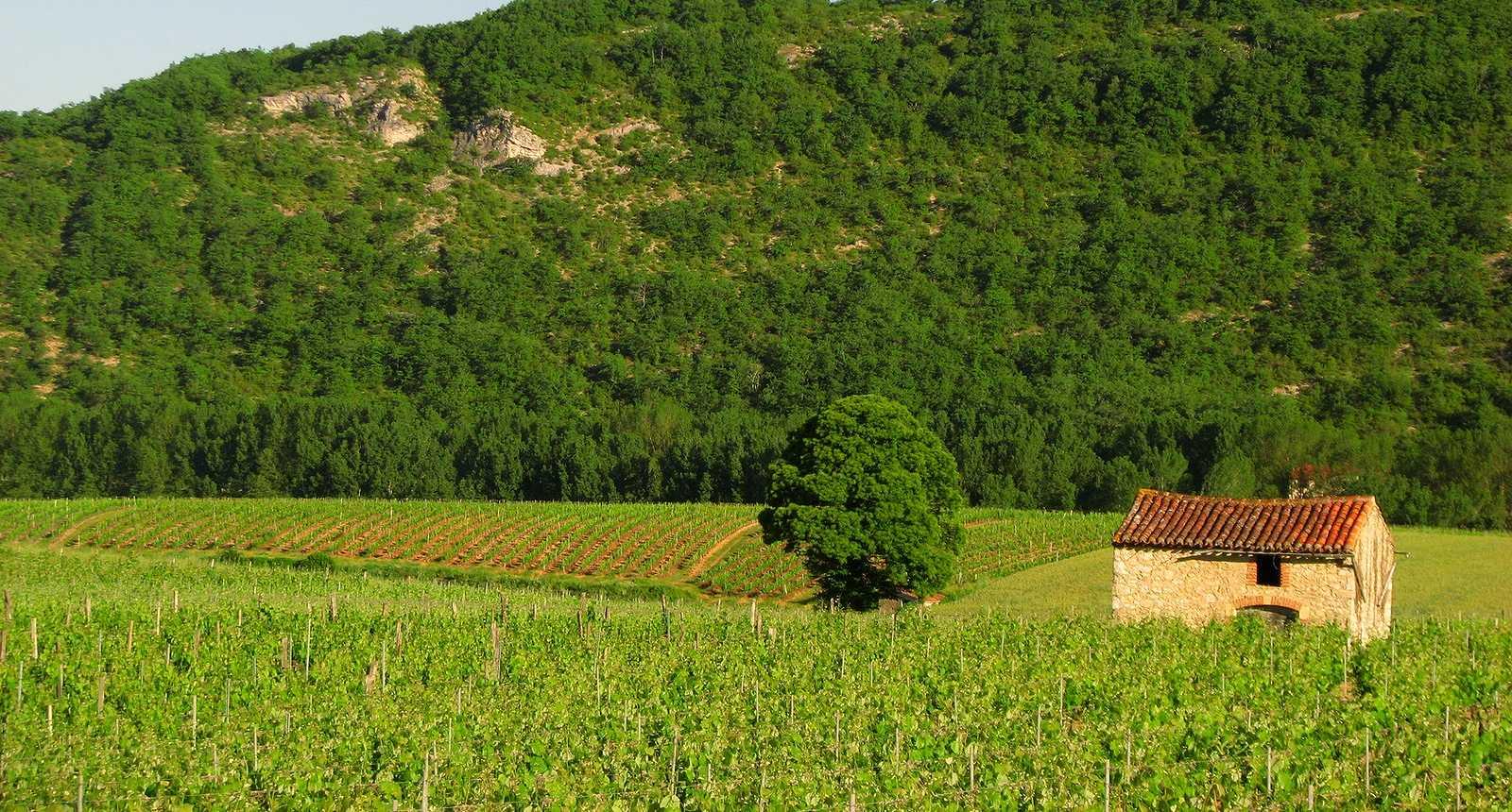 Paysage du Quercy Blanc dans la Vallée du Lot