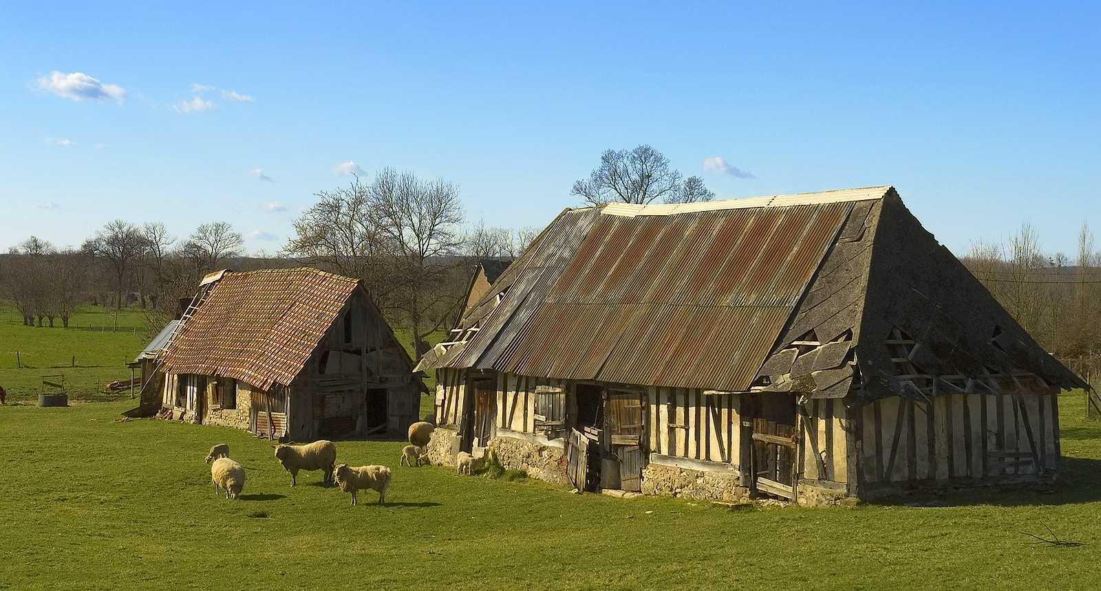 Ferme normande près de Caudebec-en-Caux