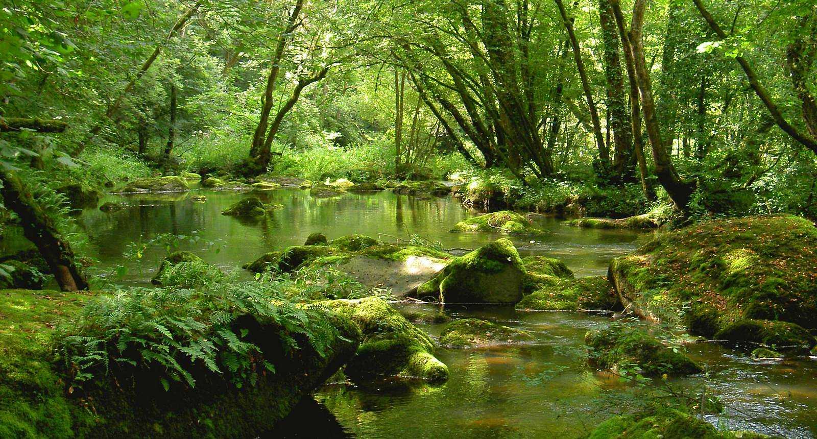 Photo ruisseau sous les arbres pr s de thury harcourt - Office de tourisme de la suisse normande ...