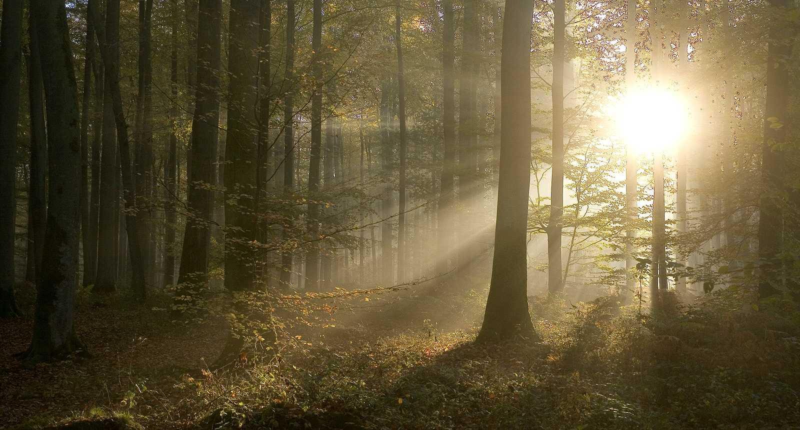 Image : Forêt domaniale De Lyons-la-forêt