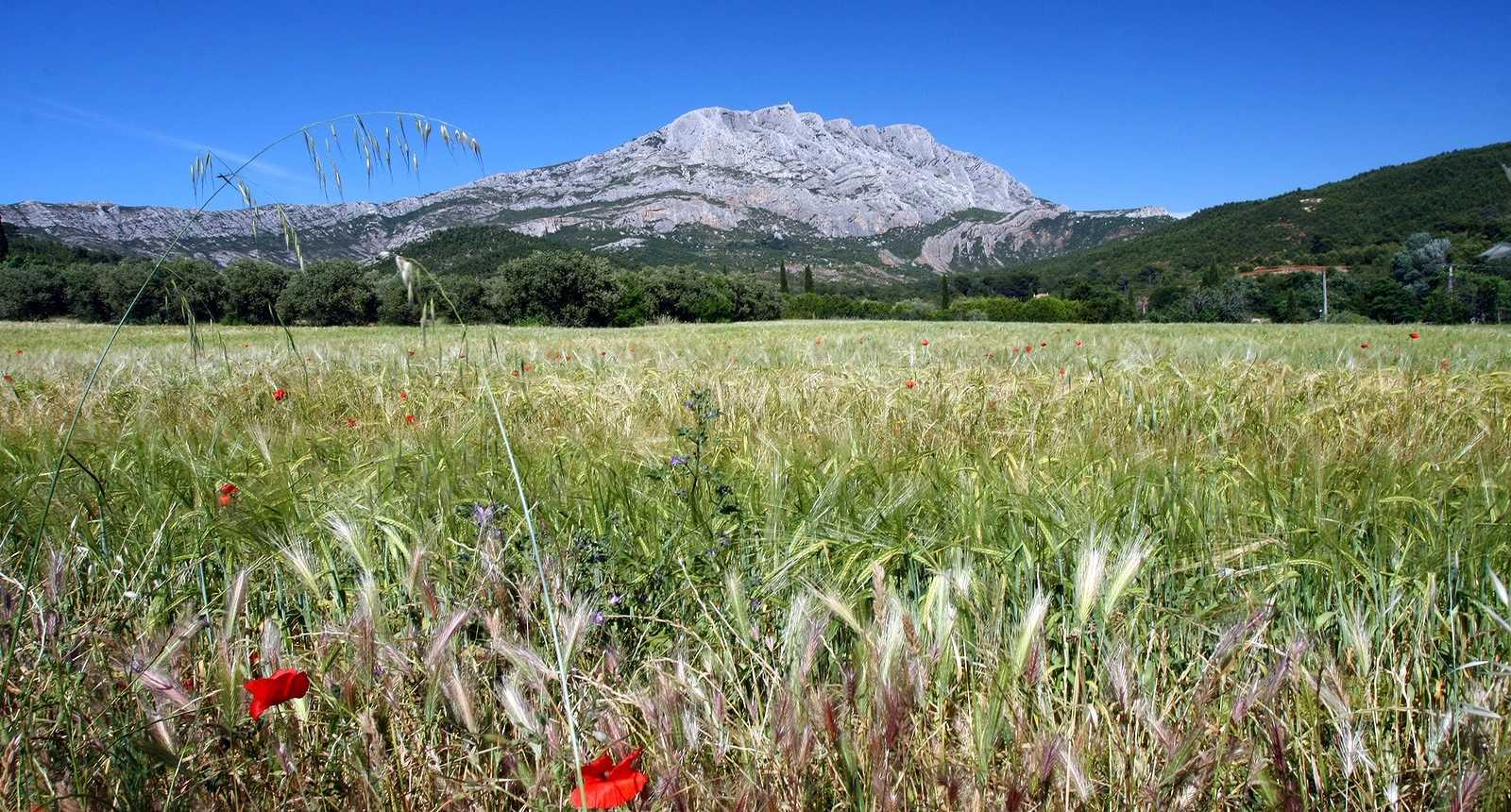 Panorama sur la Montagne Sainte-Victoire