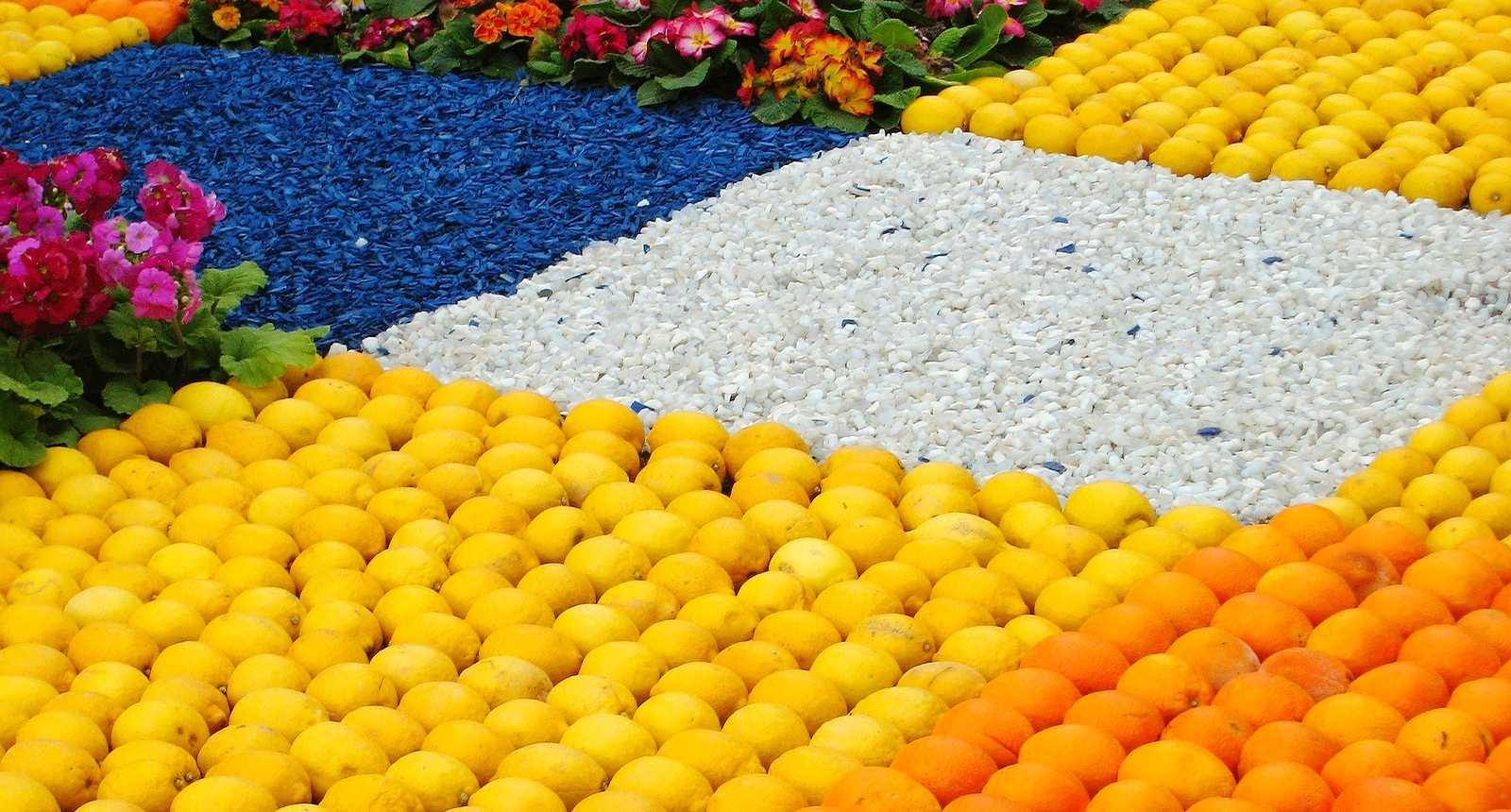 Les Jardins Biovès à Menton, pendant la Fête du Citron