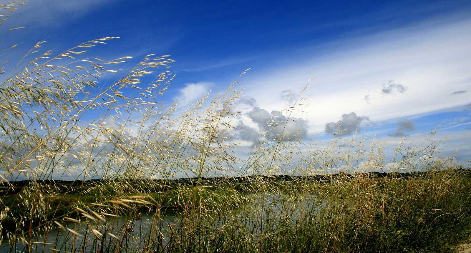 Marais en Brière