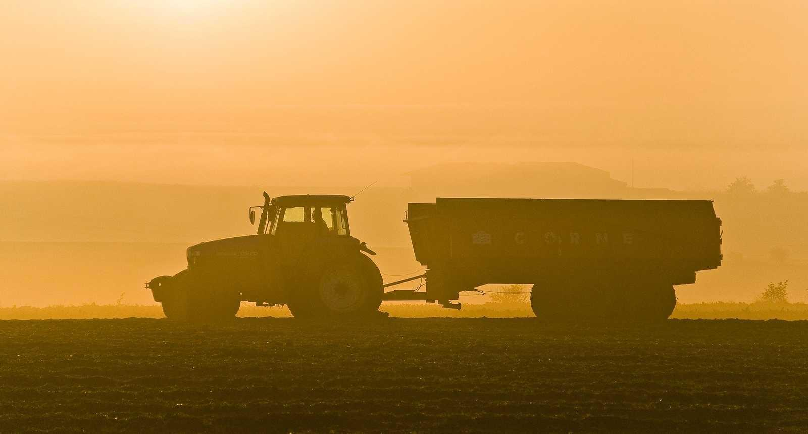 Récolte et arrachage des betteraves sucrières dans la Baie de Somme