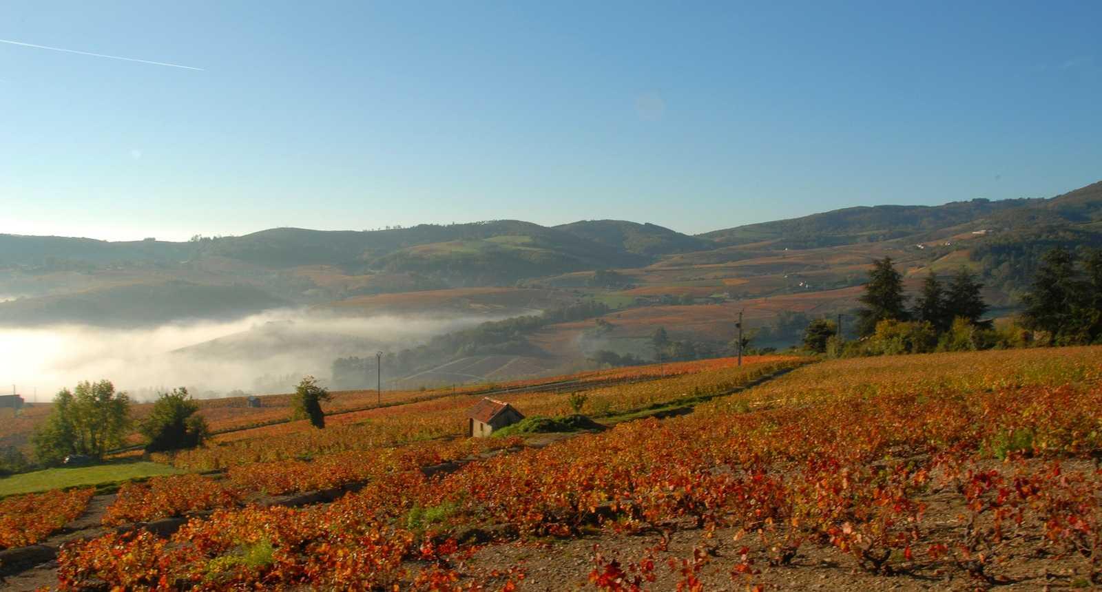 Brume automnale sur les vignobles du Beaujolais