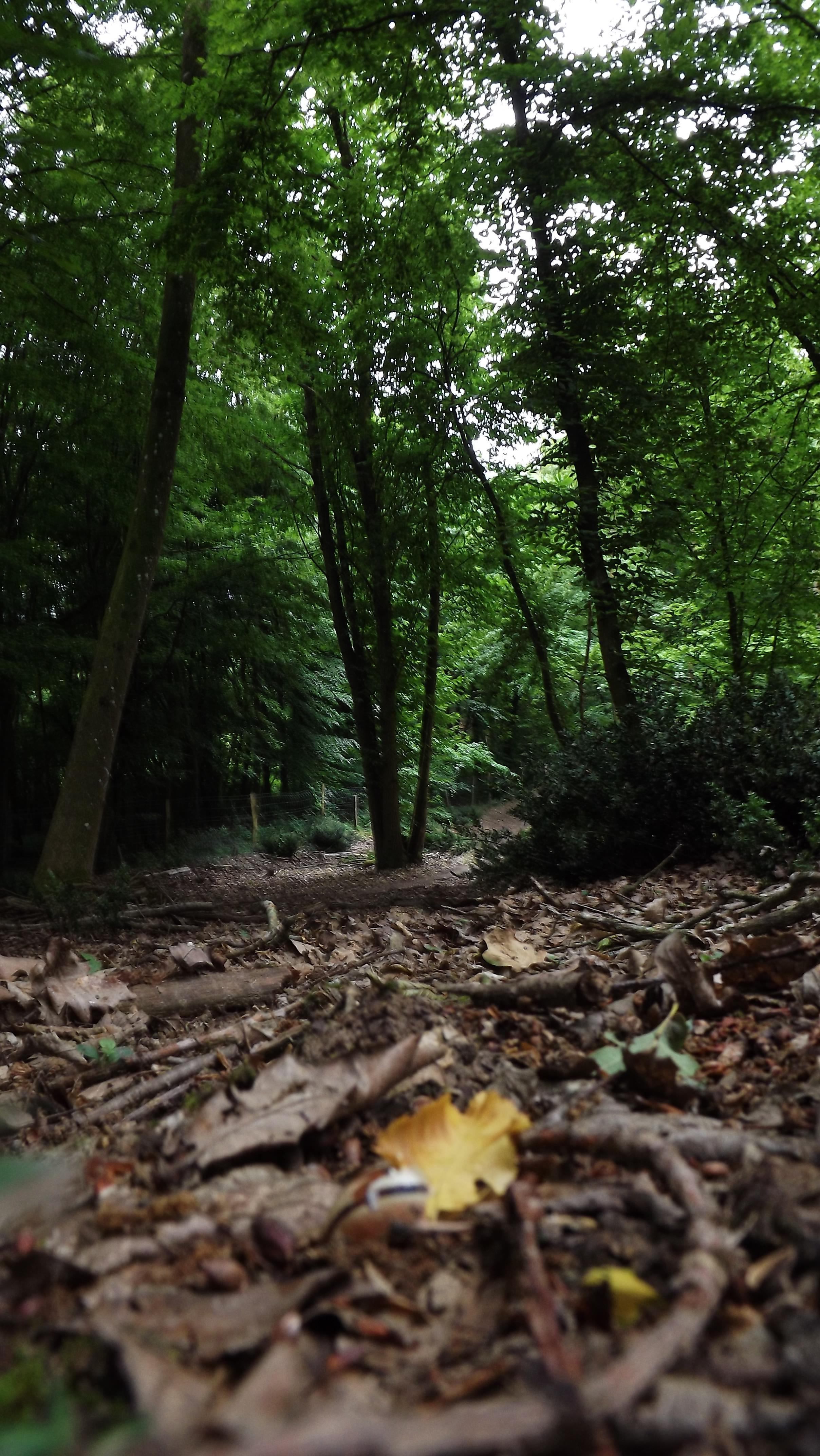 Image : Forêt domaniale De Bord-Louviers