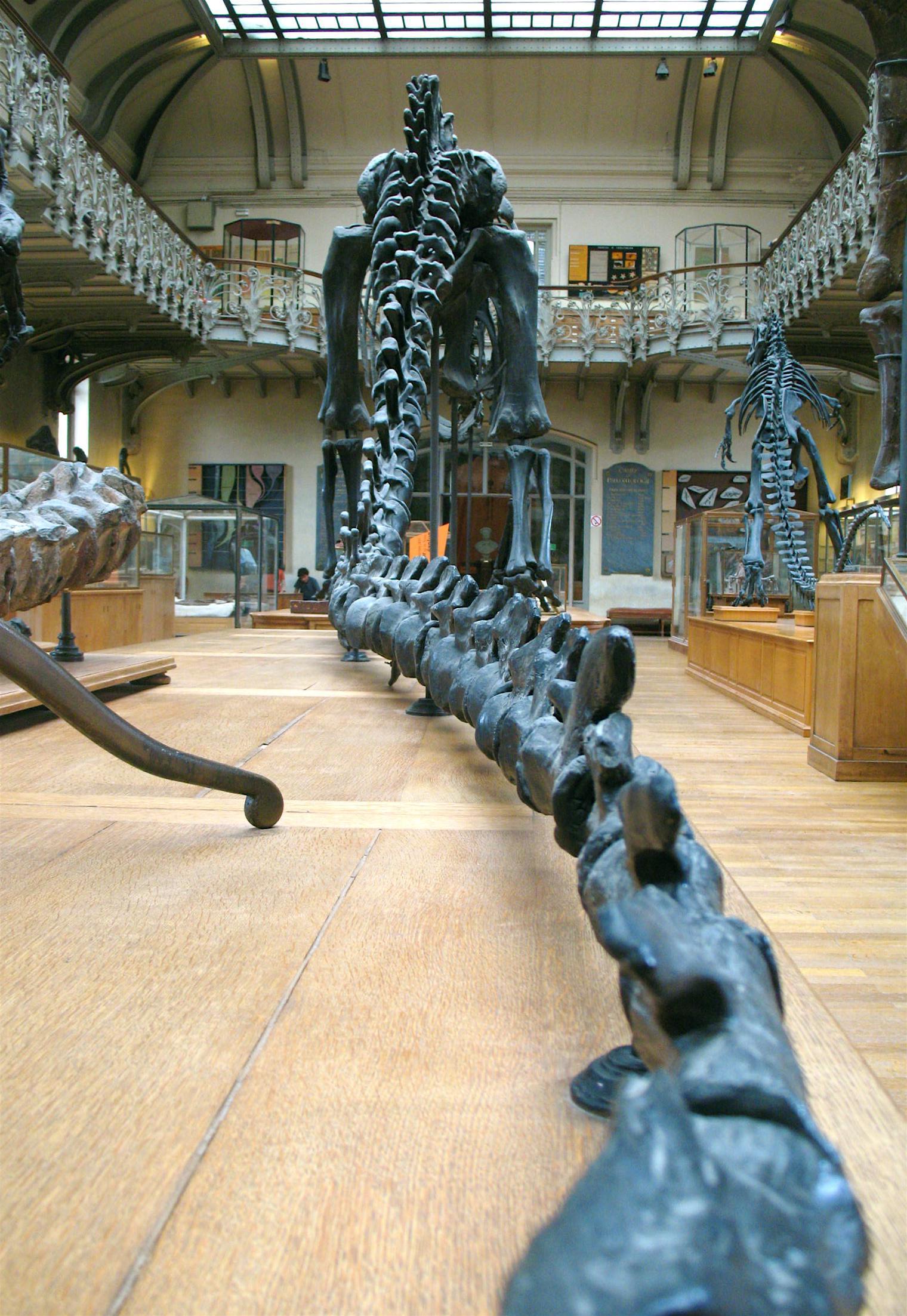 Muséum national d'histoire Naturelle - Galerie d'anatomie comparée et de paléont