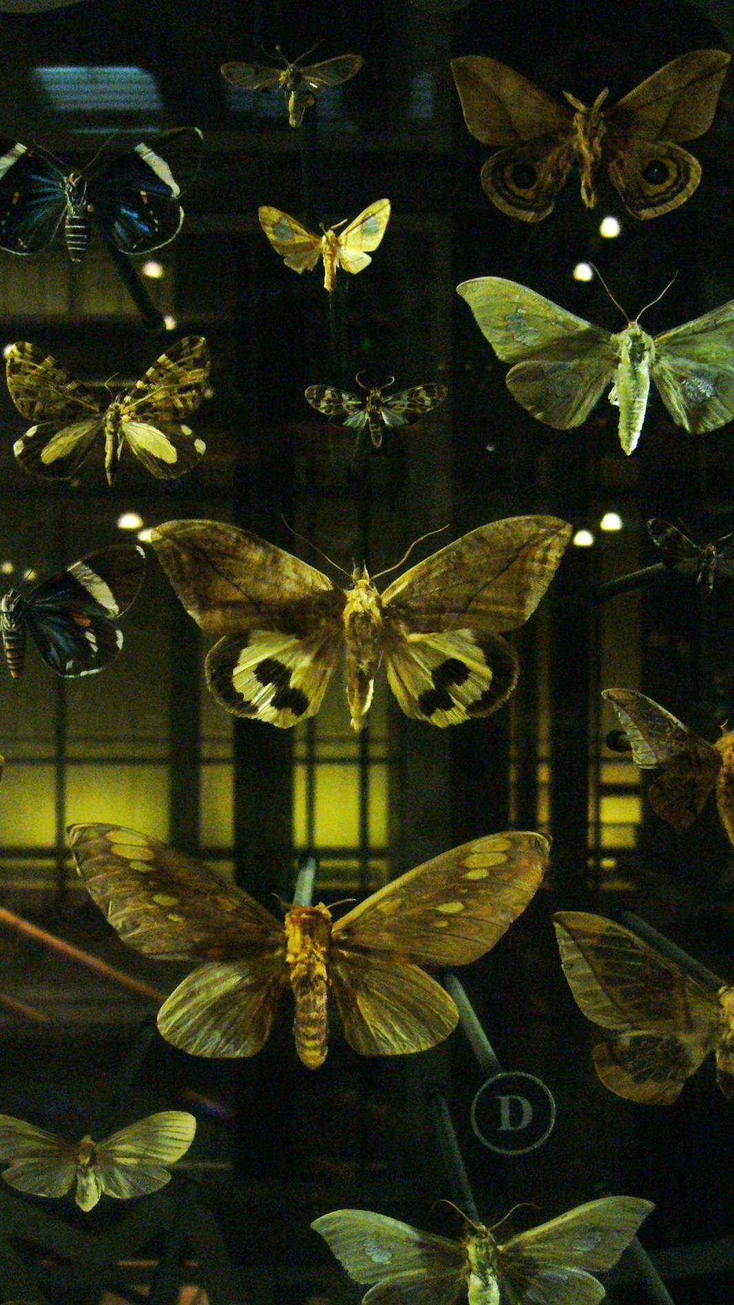 Muséum national d'histoire Naturelle - Galerie d'entomologie