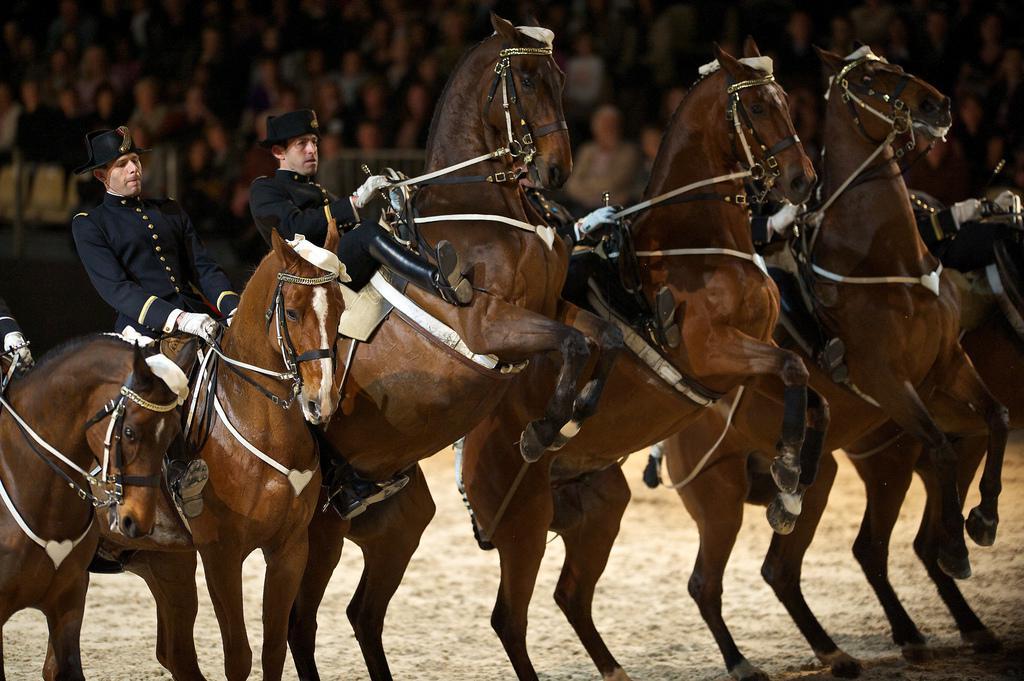 Ecole nationale d'équitation-le Cadre Noir