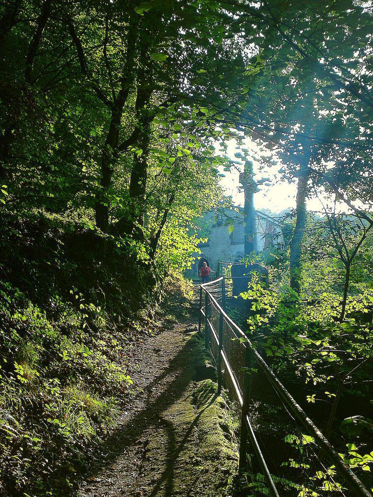 Forêt de Mervent-Vouvant