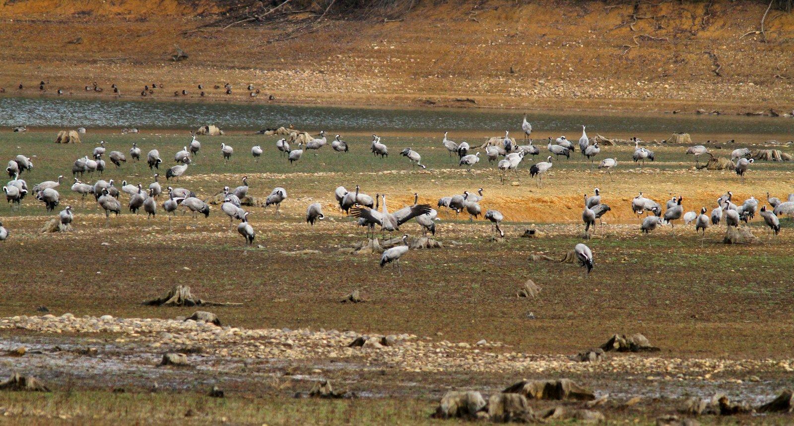 Le lac et la Réserve Ornithologique de Puydarrieux