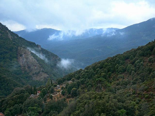 La Forêt de Zicavo