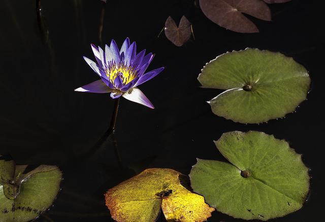 Image : Jardins d'eau