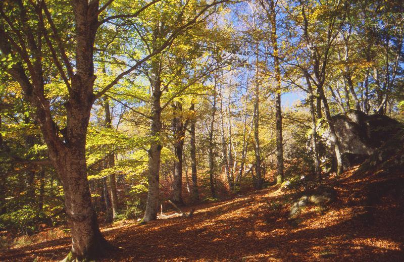 Image : Forêt de la Drouille