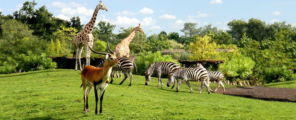 Image : Zoo de Bordeaux Pessac