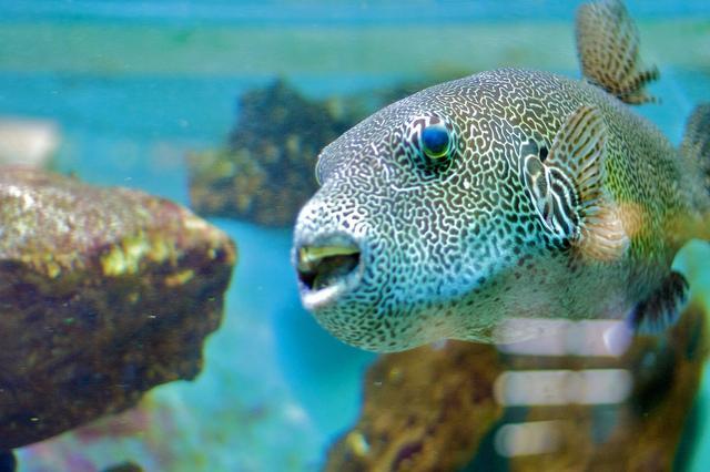 aquarium de canet en roussillon canet en roussillon 66140 pyr 233 n 233 es orientales 66