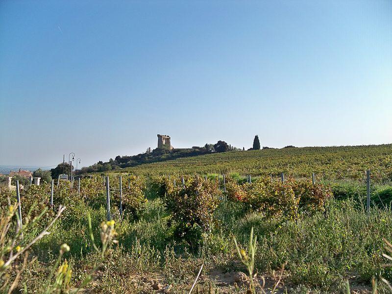 Chateauneuf des Papes - Chateau et Vignes