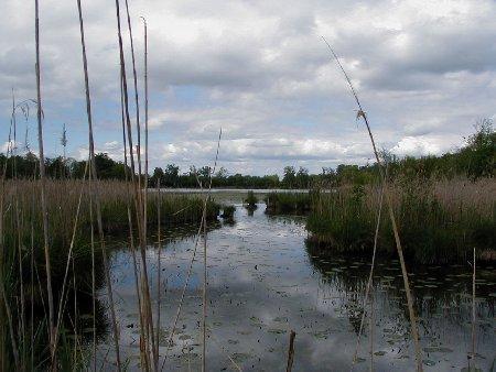 Espace Naturel sensible de l'étang de Montjoux