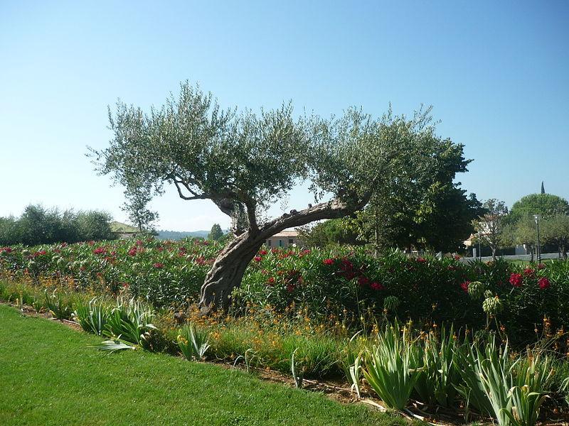 jardin des oliviers la londe les maures 83250 var 83. Black Bedroom Furniture Sets. Home Design Ideas