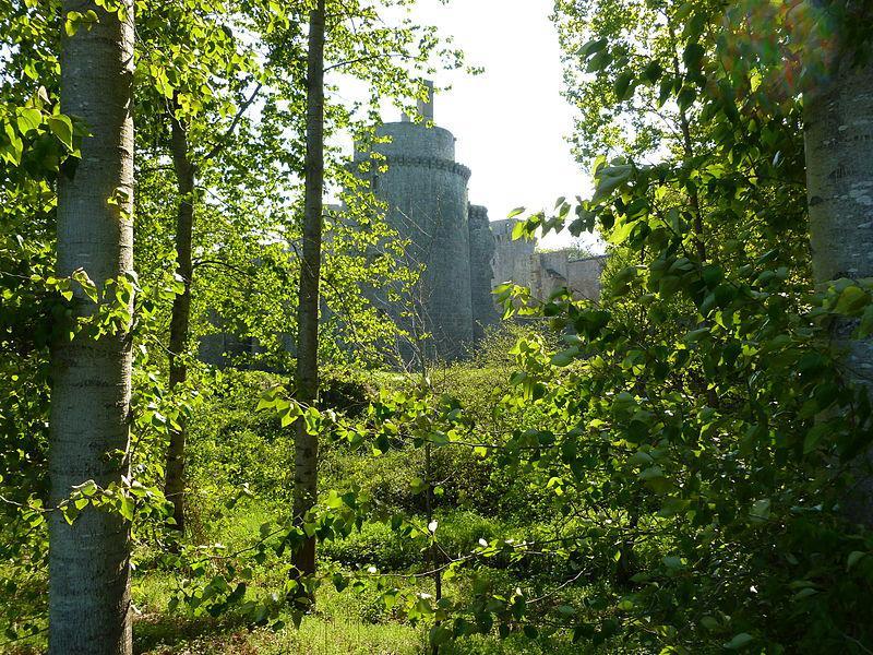 Image : Forêt de la Hunaudaye