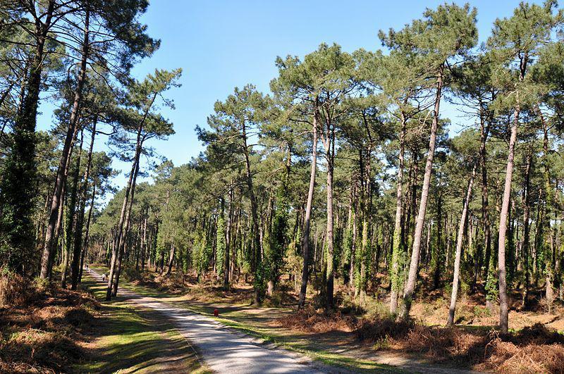 Forêt Pignada - Anglet