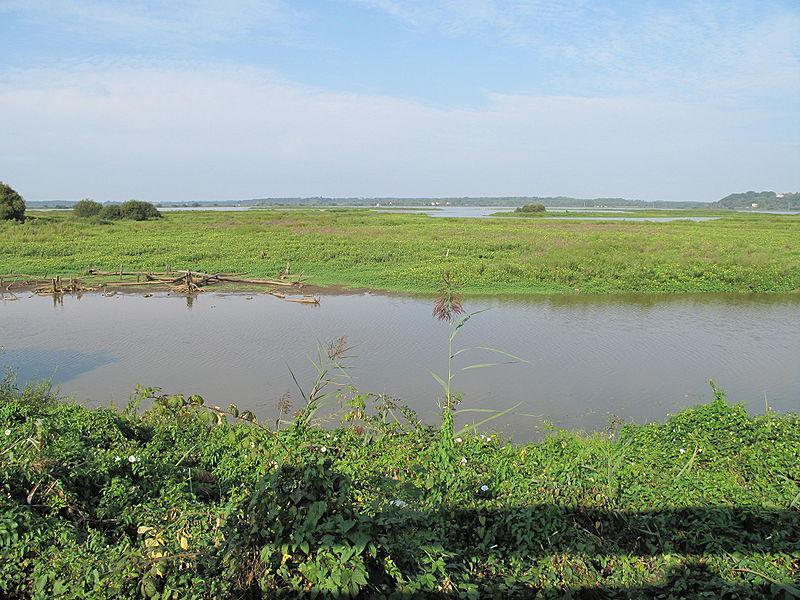 Marais d'Orx, Labenne