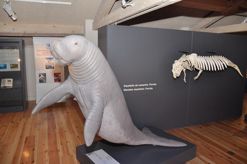 Musée des sirènes à la Maison Nature et Patrimoine de Castellane