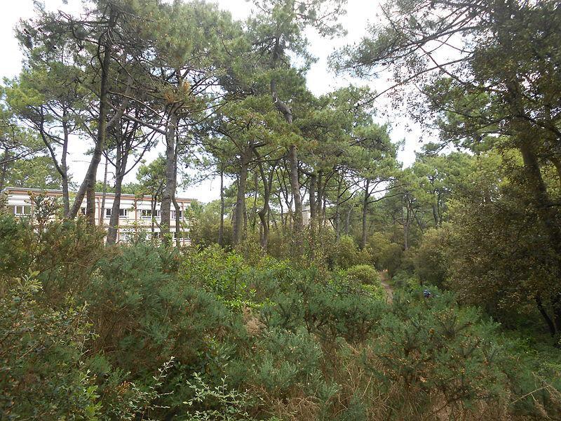 forêt de La Baule