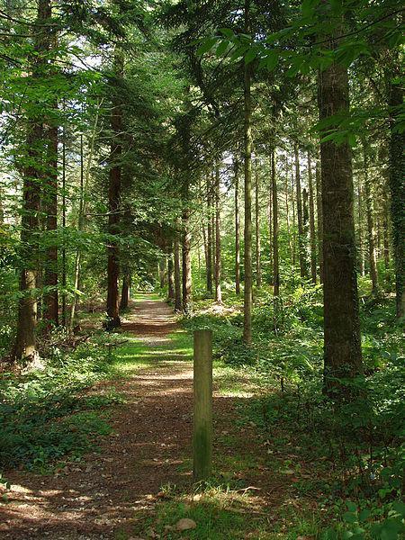 Image : Forêt de Montfort
