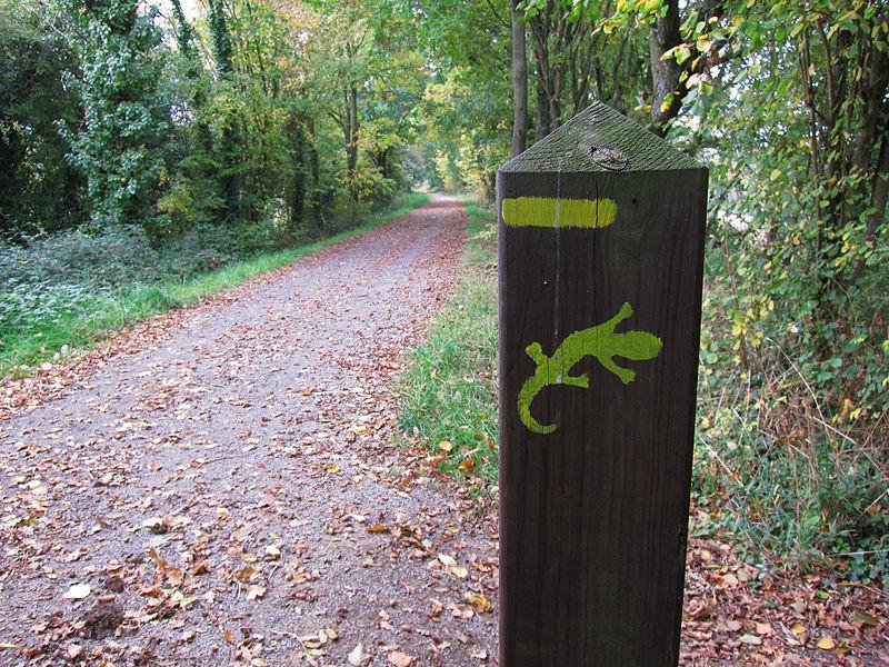Image : Forêt du Pertre