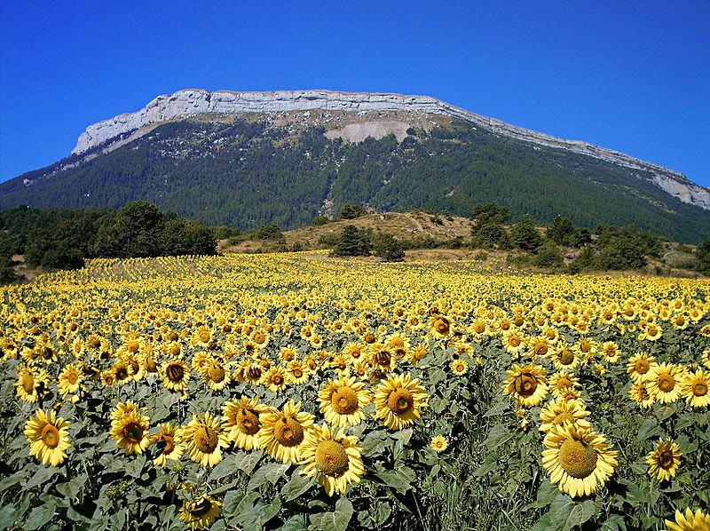 Montagne de Ceüse