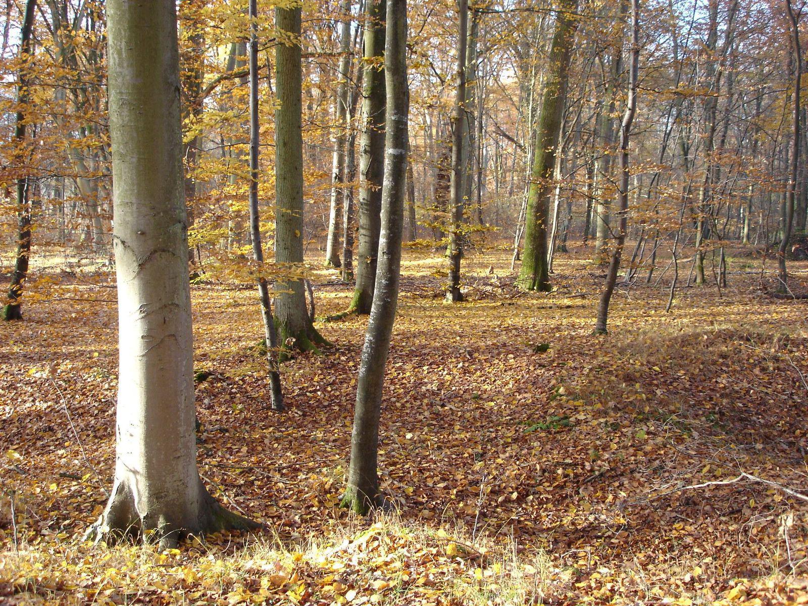 Forêt de Compiègne_Compiègne