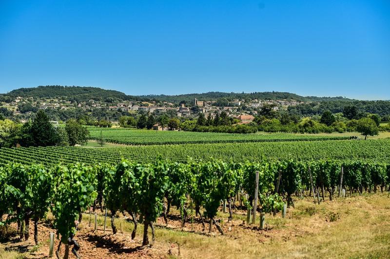 Les vignes du Clos Triguedina avec vue sur Puy L'Evêque