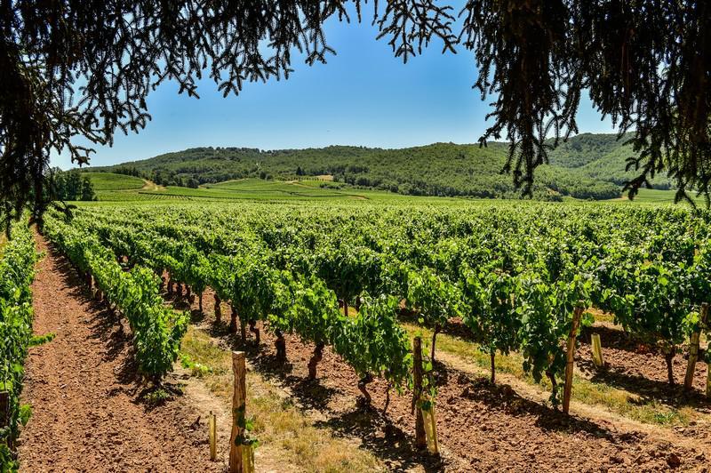 Les vignes du Clos Triguedina