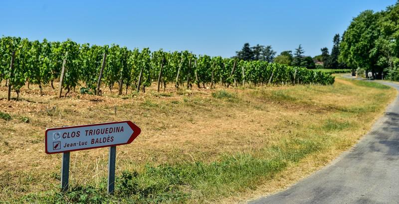 Les vignes du Clos Triguedina (2)